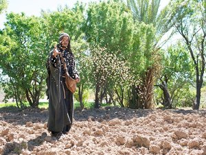 Sower (Free Bible Images)